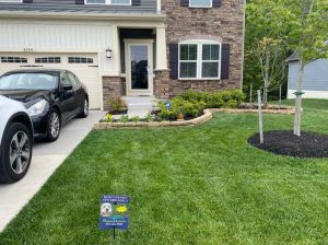 A lawn that is now healthy and green thanks to the help of Organic Lawns.