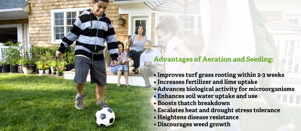 Advantages of Aeration and Seeding Services