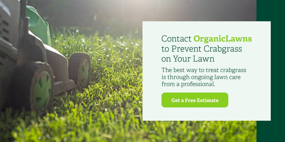 Contact Organic Lawns to prevent crabgrass on your lawn.