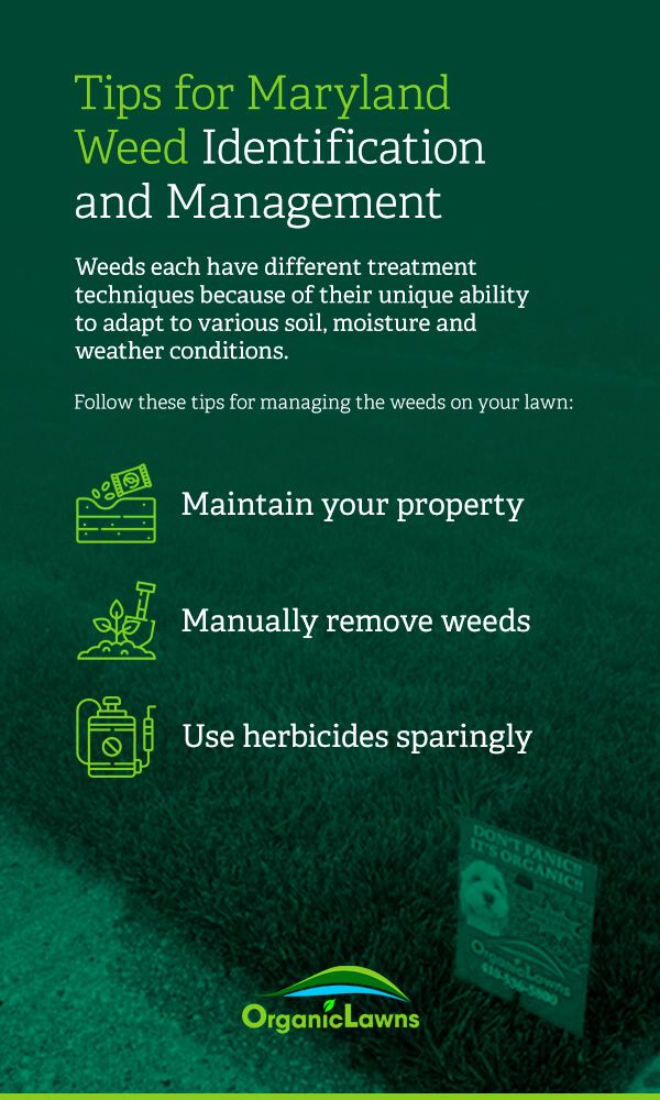 Tips for Maryland weed management: maintain your property, manually remove weeds, use herbicides sparingly.