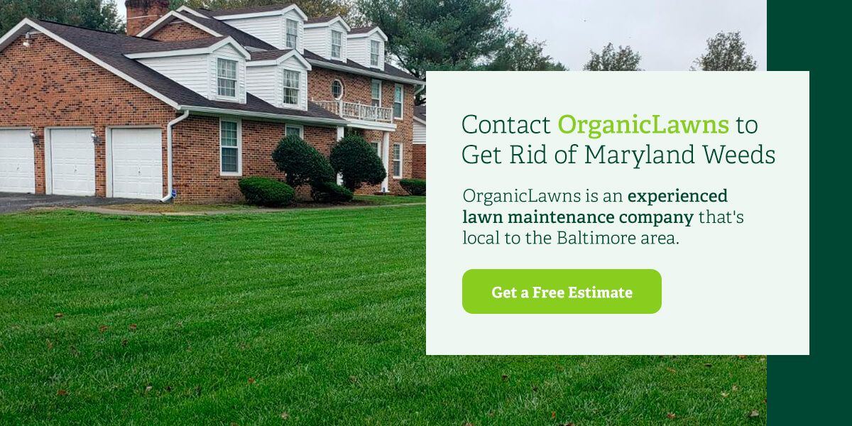 Contact Organic Lawns to get rid of Maryland weeds.