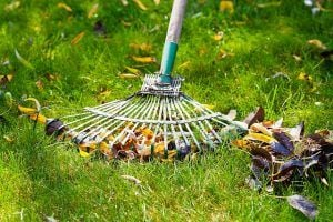 A rake being used to gather leaves in a backyard.