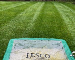 Aeration and seeding with Organic Lawns.