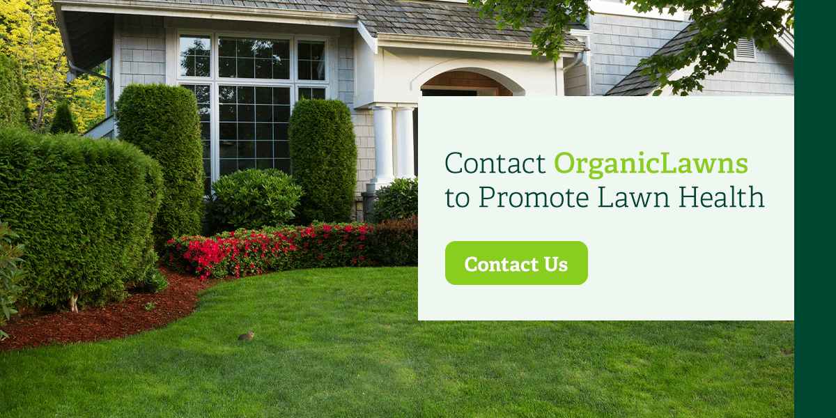 Contact Organic Lawns to promote lawn health.