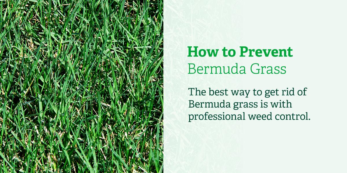 How to prevent Bermuda grass.